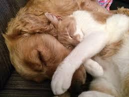 dog cat image